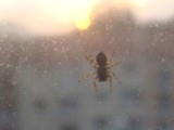 Spider up the sun by MarciaTheFaerie, Photography->Insects/Spiders gallery