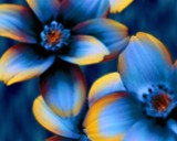 Flowerage 1 by reddawg151, abstract gallery