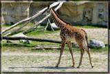 Enzi by Jimbobedsel, Photography->Animals gallery