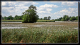 Sandusky River Wind by Jimbobedsel, Photography->Landscape gallery