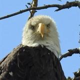 """The Look"" by BulldogsFan, photography->birds gallery"