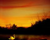 Swan Lake by LANJOCKEY, Photography->Sunset/Rise gallery