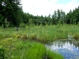 dreaming green by kiciaczek, photography->landscape gallery