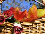 A Basket of Beauty! by marilynjane, Photography->Flowers gallery