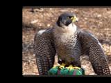 Talons XXVI by Hottrockin, Photography->Birds gallery