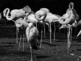Intruder by ederyunai, Photography->Animals gallery