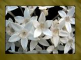 Slow Dance by Hottrockin, Photography->Flowers gallery