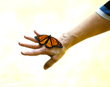 Monarch Release #4 by tigger3, photography->butterflies gallery