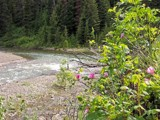 Creek & Wildflowers by kidder, Photography->Landscape gallery