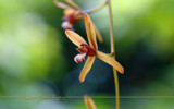 Singapore Orchid Gardens 6 by Samatar, Photography->Flowers gallery