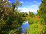McKay's Creek by madmaven, Photography->Landscape gallery