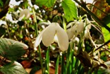 Finally here by roxanapaduraru, photography->flowers gallery