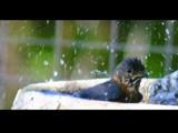 Splish-Splash by onespock, Photography->Birds gallery