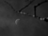 Moon & Branch by Eubeen, photography->skies gallery
