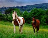 SADDLE UP by LANJOCKEY, Photography->Animals gallery