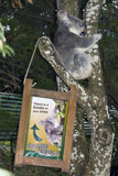 Australia Zoo Humour by armasoub, photography->animals gallery
