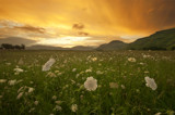 Day Dreams by dmk, photography->landscape gallery