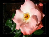 You love the roses . . . . . by LynEve, Photography->Macro gallery