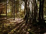 Trees by JaiJoli, photography->nature gallery