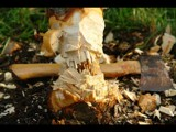 I Chopped Down a Cherry Tree by imbusion, Photography->Macro gallery