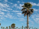 Palms on a Cloudy Blue Sky by Paddlenround, Photography->Skies gallery