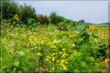 Field With All Kind Of Flowers by corngrowth, photography->flowers gallery
