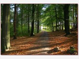 a walk in the woods by fogz, Photography->Landscape gallery
