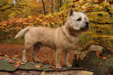 A walk in the forest - Introduction by Paul_Gerritsen, Photography->Pets gallery