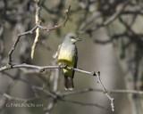 Summer Arrival by garrettparkinson, photography->birds gallery