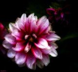 Early For Me, But On Time For Some by tigger3, photography->flowers gallery
