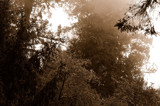 shrouded forests (sepia) by atensinferno, Photography->Nature gallery