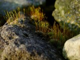 On the Rocks by kjh000, Photography->Macro gallery