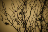 Blackbirds by Eubeen, photography->birds gallery