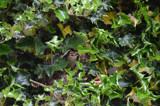 Bird Nestling by josleg, photography->birds gallery