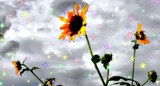 Twinkle twinkle Texas Flower by snapshooter87, photography->manipulation gallery