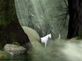 Enchanted Forrest by DigitalFX, Computer->Landscape gallery