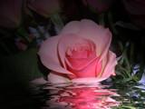 Rose Scented Bath! by marilynjane, Rework gallery