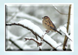 Braving The Elements by gerryp, Photography->Birds gallery