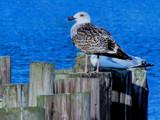 Bird Talk by muggsy, Photography->Birds gallery