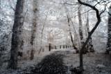 A path less taken by biffobear, photography->manipulation gallery