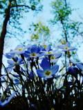 Teenie Weenie Little Flowers by nessalovesnature, photography->flowers gallery