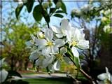 On My Street by trixxie17, photography->flowers gallery