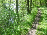 River Path by graffitigirl21, photography->landscape gallery