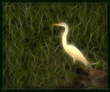 Egret All Aglow by Jimbobedsel, Photography->Manipulation gallery