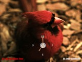 TICK Tock, It's a Cardinals Clock by Jimbobedsel, Photography->Manipulation gallery