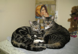 Cat Caring Center by Con_, photography->animals gallery