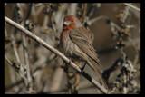 Splash of Color by garrettparkinson, photography->birds gallery