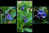 Ready, set, go! by wheedance, Photography->Flowers gallery