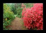 Jeli Arboretum #2 by Toto_san, Photography->Landscape gallery