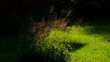 Grasses in the afternoon light by SEFA, photography->nature gallery